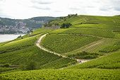 Beautiful Wineries In The Summer Season In Western Germany, A Visible Road Between Rows Of Grapes An poster