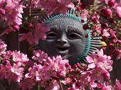 Dogwood Blossom Smil