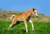 Foal Run