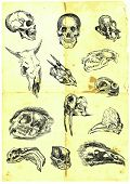 various skulls