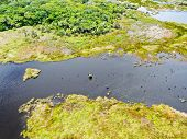 Aerial View Of Tropical Rain Forest, Jungle In Brazil. Wetland Forest With River, Lush Ferns And Pal poster