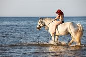 pic of shire horse  - Woman with big white horses bathing horse in sea - JPG