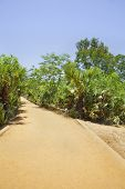 Vertical Tropical Red Gravel Drive Road Path