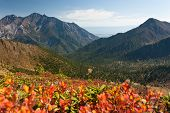 Colorful Fall In The Mountains