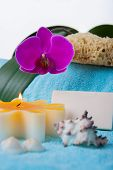 Orchid, candle and shells