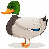 Cartoon Mallard Duck