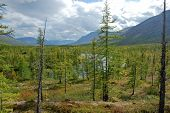 stock photo of taimyr  - The end of the summer on the Putorana plateau - JPG
