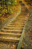Ladder In Park