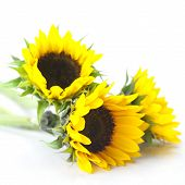 Bouquet Of Three Sunflowers Isolated On White