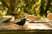 Alimentación de granos en un parque de las aves