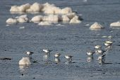 Seafoam and Sanderlings