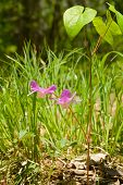 Flowers Of Small Orchid