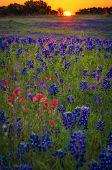 Wildflower Sunrise On Sugar Ridge Road