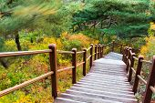 Wooden hiking path in forest