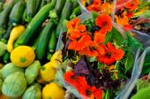 Fancy Salad Greens And Squash