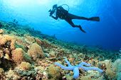 Scuba Diver and coral reef with starfish