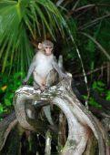 Forest Monkey Sitting