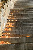 Scattered leaves on stone steps