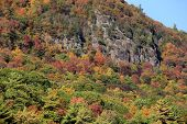 Gorgeous foliage on rocky mountainside