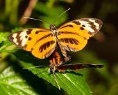 Bekämpfung von Schmetterling