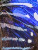 Blauer Schmetterling Muster