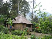 Native Hut PNG