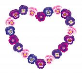 Pansy Heart Pink