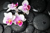 Spa Concept Of Beautiful Orchid (phalaenopsis) And Zen Stones With Drops