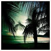 Instagram style image of palm trees, Playa de Herradura, Costa Rica