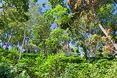 Deep Tropical Forest