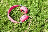 Bright Colored Pink Headphones On Green Sward