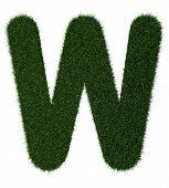 Grass alphabet-W
