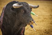 stock photo of bullfighting  - Capture of the figure of a brave bull in a bullfight Spain - JPG