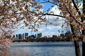 Spring has sprung in Boston