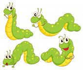 image of caterpillar cartoon  - Illustration of the four green caterpillars on a white background - JPG