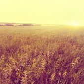 Summer field at sunset in vintage style.