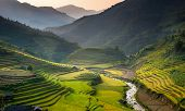 Rice terrace in Vietnam.