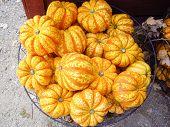Orange Gourds At Market