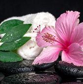 Healthcare Concept Of Pink Hibiscus, Green Leaf Shefler With Drops And White Stacked Towels On Zen S