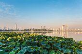 Lotus Pond And Modern City