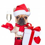 picture of christmas dog  - santa claus christmas dog toasting cheers with champagne glass isolated on white background - JPG