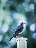 Tropical bird posing