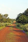 Tropical Countryside Path
