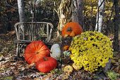 Thanksgiving Display Of Pumpkins And Gourds