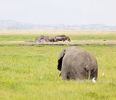 Hippos And Elephant In Kenya