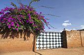 Flowers And Gate, Kenya