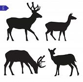 Vector Silhouettes Of Deer