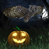 Halloween pumpkin and owl in night forest holiday background