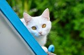 Cute White Cat On Nature