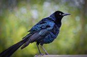 Blue Bird on Watch